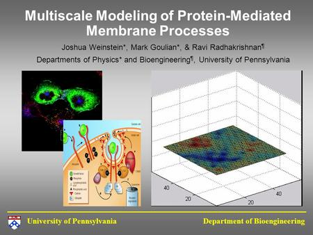 Multiscale Modeling of Protein-Mediated Membrane Processes
