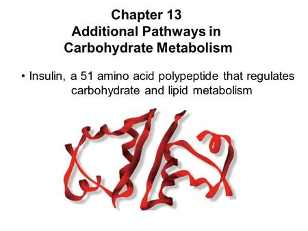 Prentice Hall c2002Chapter 131 Chapter 13 Additional Pathways in Carbohydrate Metabolism Insulin, a 51 amino acid polypeptide that regulates carbohydrate.
