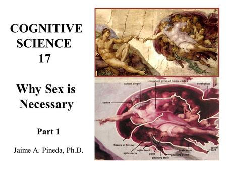 COGNITIVE SCIENCE 17 Why Sex is Necessary Jaime A. Pineda, Ph.D.