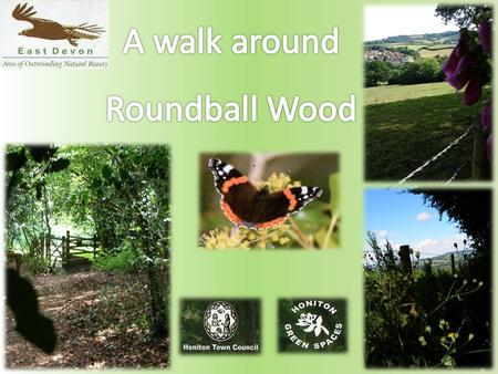 Roundball Wood is a pretty, self-contained area of woodland situated to the south of Honiton within the East Devon Area Of Outstanding Natural Beauty.