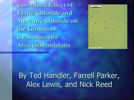 Combined Effect of Ferric Chloride and Mercuric Chloride on the Growth of Cyanobacteria Anacystis nidulans By Ted Handler, Farrell Parker, Alex Lewis,