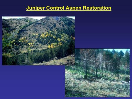 Juniper Control Aspen Restoration. Aspen, Northern Great Basin.