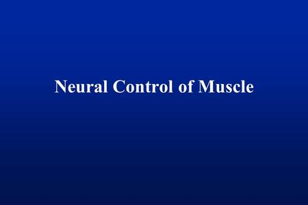 Neural Control of Muscle. Quick Review: Spinal Cord Flexors Extensors.