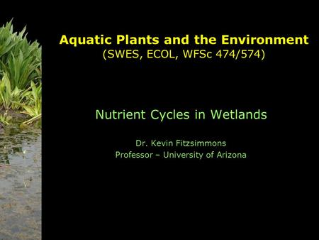 Aquatic Plants and the Environment (SWES, ECOL, WFSc 474/574) Nutrient Cycles in Wetlands Dr. Kevin Fitzsimmons Professor – University of Arizona.