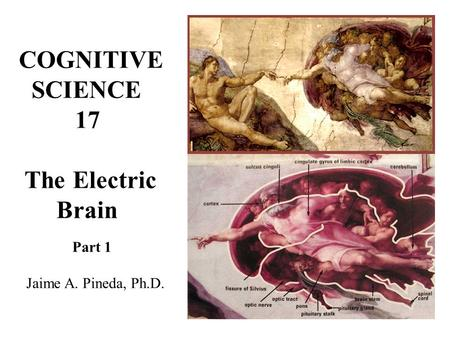 COGNITIVE SCIENCE 17 The Electric Brain Part 1 Jaime A. Pineda, Ph.D.