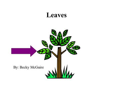 Leaves By: Becky McGuire. Function make food used by plants for growth & reproduction.