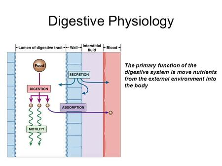 Digestive Physiology The primary function of the digestive system is move nutrients from the external environment into the body.