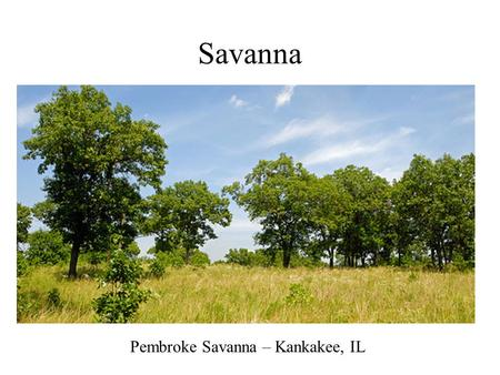 Savanna Pembroke Savanna – Kankakee, IL. Savanna in Wisconsin.