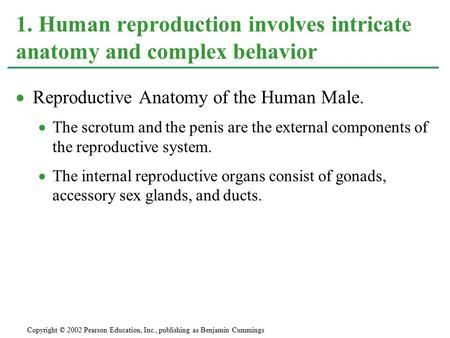  Reproductive Anatomy of the Human Male.  The scrotum and the penis are the external components of the reproductive system.  The internal reproductive.