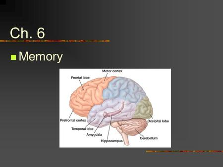 Ch. 6 Memory. The information-processing model of memory describes how information is encoded, organized, and stored in memory, and how it is retrieved.