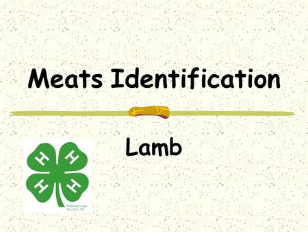 Meats Identification Lamb. Wholesale Cuts Leg Shoulder Loin Rib Breast Variety.
