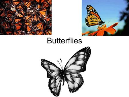 Butterflies. Butterflies Contents Life Cycle Stage 1 Stage 2 Stage 3 Stage 4 Coloring Page.