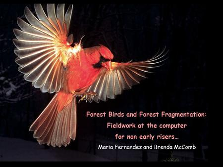 Forest Birds and Forest Fragmentation: Fieldwork at the computer for non early risers… Maria Fernandez and Brenda McComb.