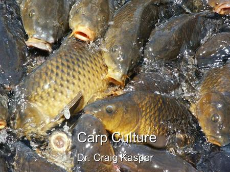 Carp Culture Dr. Craig Kasper. Introduction Possibly the oldest form of aquaculture in the known world.Possibly the oldest form of aquaculture in the.