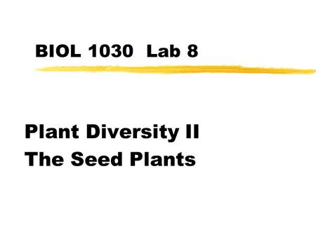 Plant Diversity II The Seed Plants