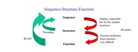 Sequence-Structure-Function Sequence Structure Function Threading Ab initio BLAST Folding: impossible but for the smallest structures Function prediction.