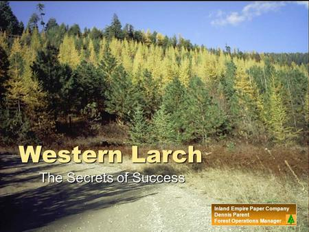 Western Larch The Secrets of Success Inland Empire Paper Company Dennis Parent Forest Operations Manager.