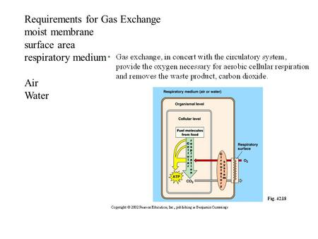 Requirements for Gas Exchange moist membrane surface area respiratory medium Air Water.