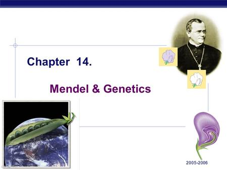AP Biology 2005-2006 Chapter 14. Mendel & Genetics.
