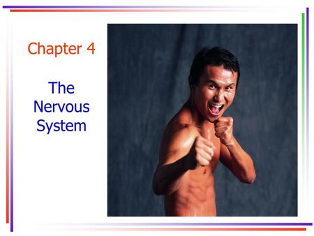 Chapter 4 The Nervous System. Key Concepts autonomic nervous systemautonomic nervous system axon central nervous systemcentral nervous system crossed.