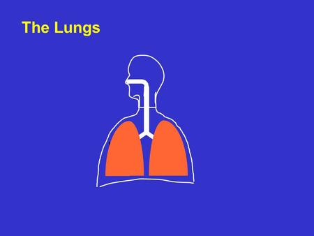 The Lungs. Gas exchange tissue CO 2 O2O2 Lung compartments air compartment vascular compartment.