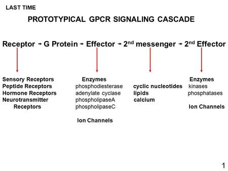 Receptor G Protein Effector 2 nd messenger 2 nd Effector Sensory Receptors Enzymes Enzymes Peptide Receptors phosphodiesterase cyclic nucleotides kinases.