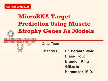 MicroRNA Target Prediction Using Muscle Atrophy Genes As Models Caltech Wold Lab Mentors: Dr. Barbara Wold Diane Trout Brandon King Gilberto Hernandez,