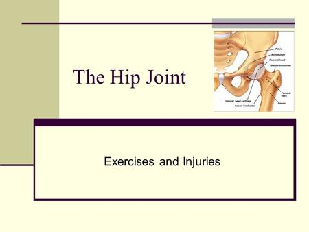 The Hip Joint Exercises and Injuries. Pelvis Abnormalities To appreciate the abnormalities that may occur, picture a box around the pelvis. The two most.