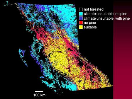 Base data - habitat not forested climate unsuitable, no pine climate unsuitable, with pine no pine suitable 100 km.
