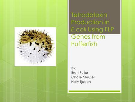 Tetrodotoxin Production in E.coli Using FLP Genes from Pufferfish By: Brett Fuller Chase Meusel Holly Tjaden.