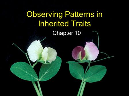 Observing Patterns in Inherited Traits Chapter 10.