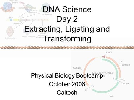 DNA Science Day 2 Extracting, Ligating and Transforming Physical Biology Bootcamp October 2006 Caltech.