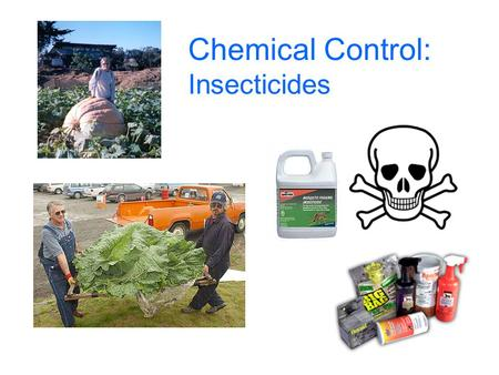 Chemical Control: Insecticides. Insecticides are one of the four building blocks of IPM Chemical Biological Cultural Plant resistance IPM.