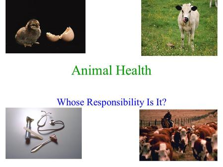 1 Animal Health Whose Responsibility Is It?. 2 Animal Health Concerns Three Levels Of Responsibility What Are They? The Animal Owner Veterinarian Government.