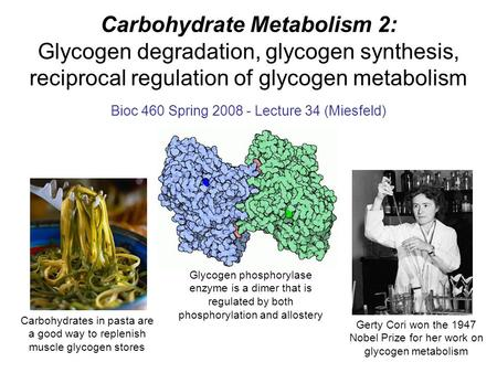 Carbohydrate Metabolism 2: Glycogen degradation, glycogen synthesis, reciprocal regulation of glycogen metabolism Bioc 460 Spring 2008 - Lecture 34 (Miesfeld)
