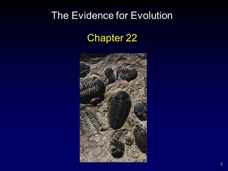 1 The Evidence for Evolution Chapter 22. 2 Darwin's Finches.
