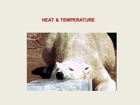 HEAT & TEMPERATURE. Temperature Scales Heat Transfer and Warming.