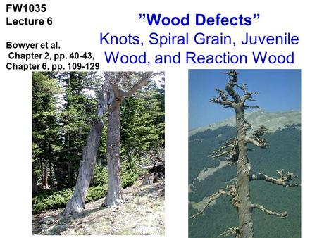 """Wood Defects"" Knots, Spiral Grain, Juvenile Wood, and Reaction Wood"