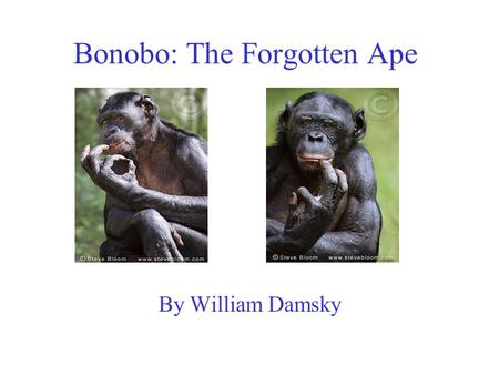 Bonobo: The Forgotten Ape By William Damsky. Bonobos Are in Danger Adults are hunted for bush-meat. Infants are trapped for pets, and usually die. This.