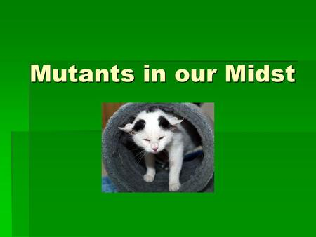 Mutants in our Midst. The Body  Look around you! Every animal has certain anatomical similarities.  Among species, the arms and legs attach and move.