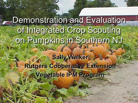 Demonstration and Evaluation of Integrated Crop Scouting on Pumpkins in Southern NJ Sally Walker Rutgers Cooperative Extension Vegetable IPM Program.