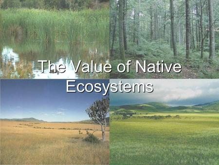 The Value of Native Ecosystems. Ecosystem Services Ecosystem services are benefits that humans need to maintain a good quality of life. Clean waters Clean.
