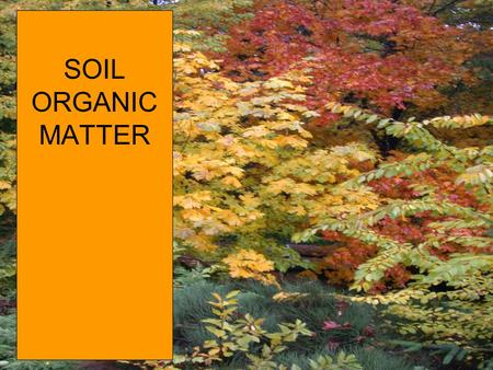 SOIL ORGANIC MATTER. Organic Matter Decomposition: a cyclic view organic matter population sizes, temperature, moisture energy + CO 2 Biomass (more bugs)