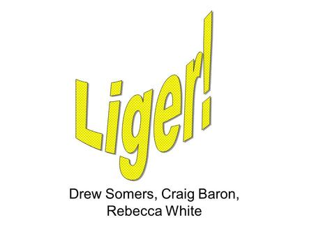 Drew Somers, Craig Baron, Rebecca White. Webster's Dictionary defines the liger as half lion, half tiger, all terror. (as drawn by Napoleon Dynamite)