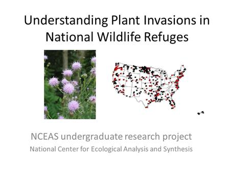 Understanding Plant Invasions in National Wildlife Refuges NCEAS undergraduate research project National Center for Ecological Analysis and Synthesis.