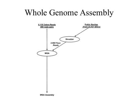 Whole Genome Assembly. WGA 1. Screener 2. Overlapper 3. Unitigger, 4. Scaffolder, 5. Repeat Resolver.