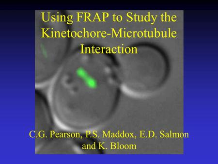 Using FRAP to Study the Kinetochore-Microtubule Interaction