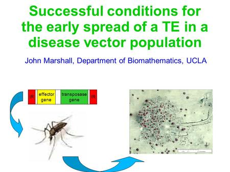 Successful conditions for the early spread of a TE in a disease vector population John Marshall, Department of Biomathematics, UCLA transposase gene effector.