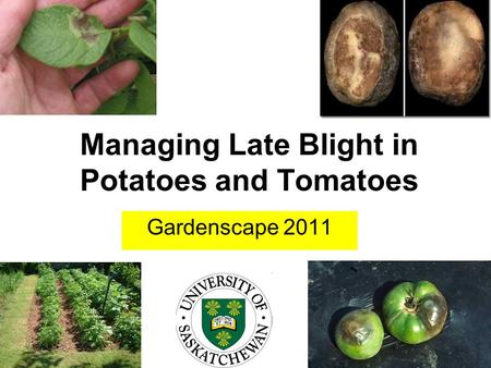 Managing Late Blight in Potatoes and Tomatoes Gardenscape 2011.