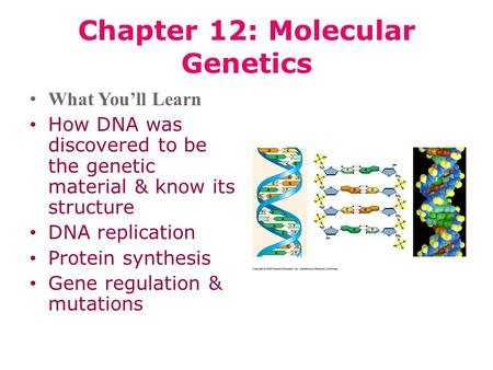 Chapter 12: Molecular Genetics What You'll Learn How DNA was discovered to be the genetic material & know its structure DNA replication Protein synthesis.